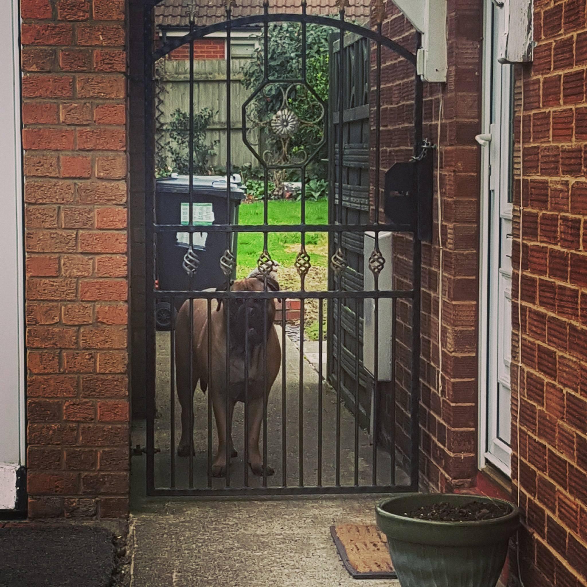 Barnsley - Dog Walker - Walking