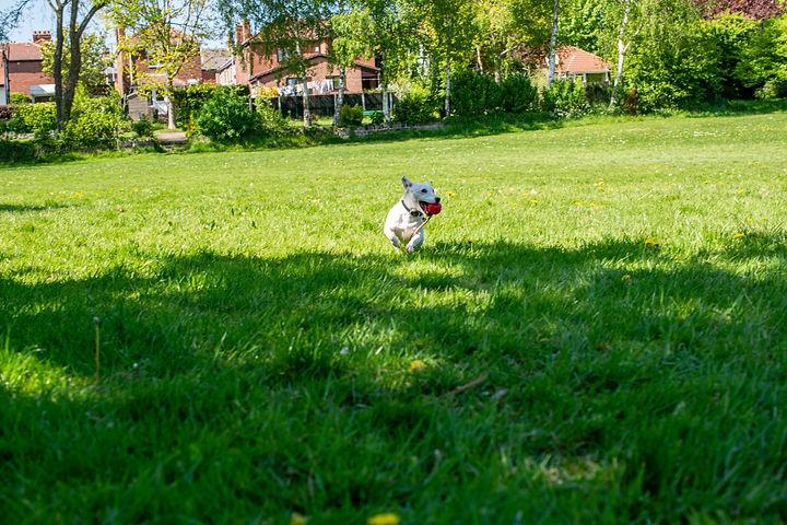 Pippa Run.jpg