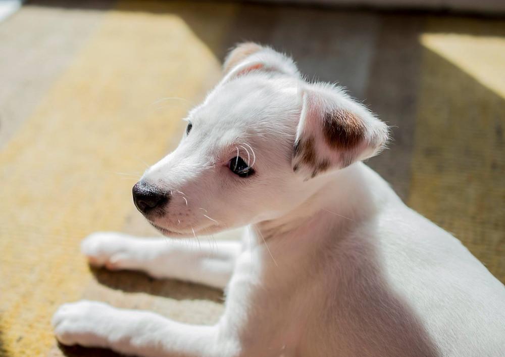 Dog Walker - Barnsley - Reactive Dog