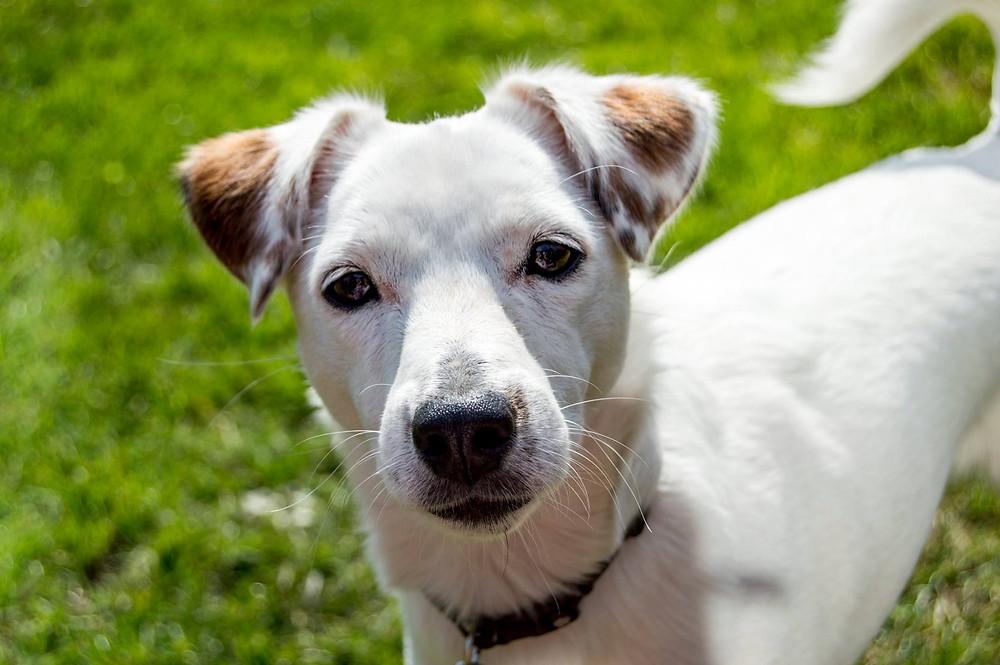 Barnsley - Dog Walker - Reactive Dog