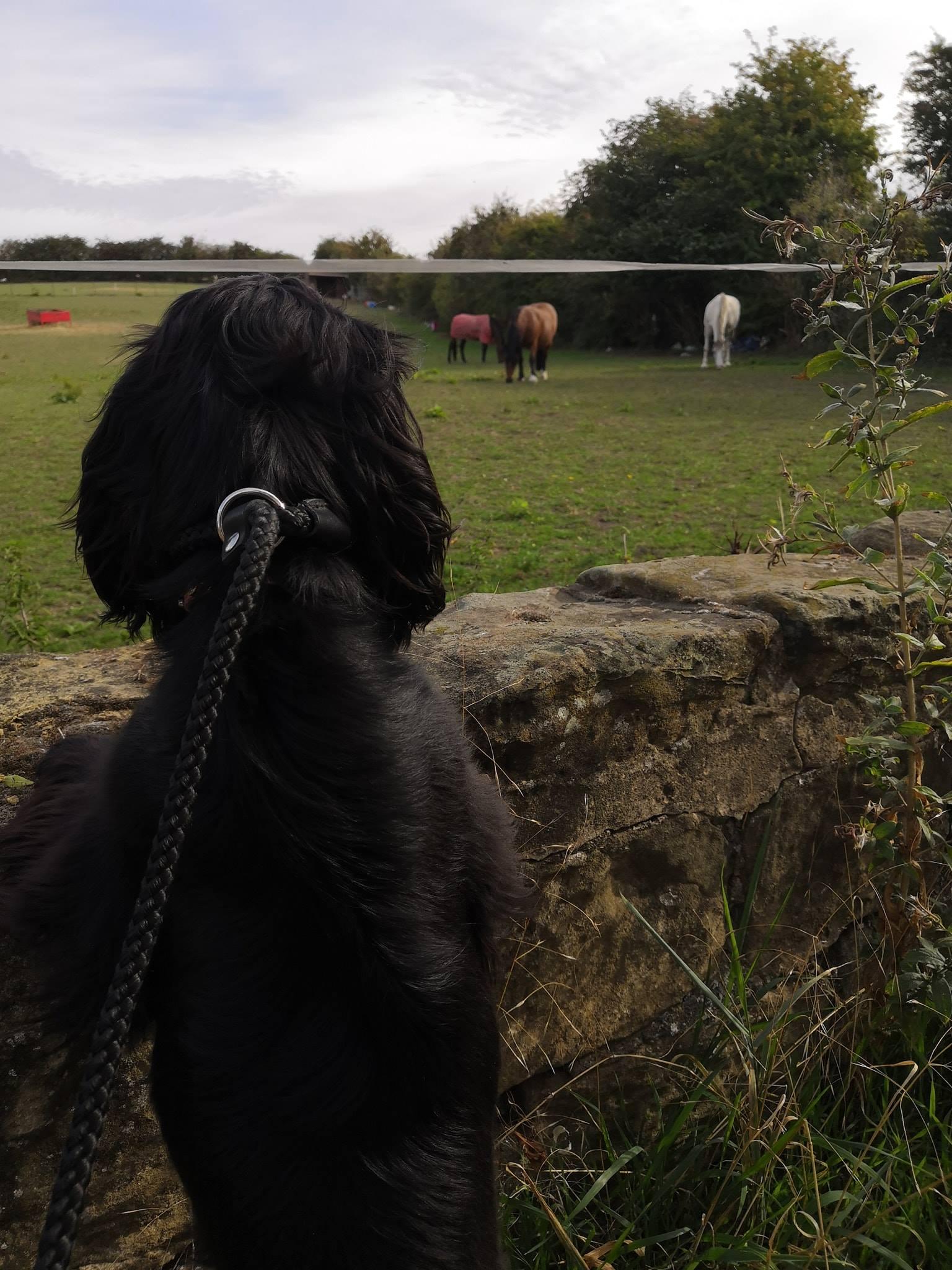 Dog Walker - Barnsley - Walking