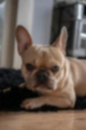 Pet Sitting - Barnsley - Dog Walker
