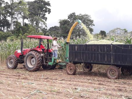 Prefeitura colhe mais 300 toneladas de milho no primeiro semestre em Brasiléia