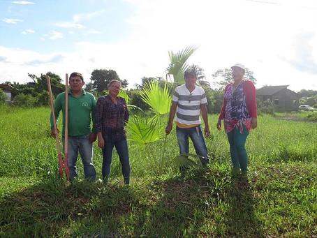 Prefeitura de Brasiléia realiza trabalho de arborização na cidade