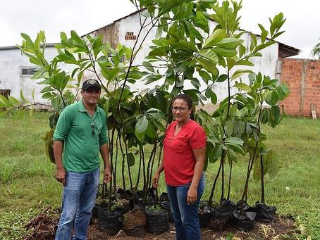 Prefeitura de Brasiléia trabalha no plantio de mudas para arborização