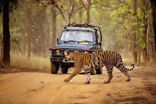 Jungle-Safari-1.jpeg