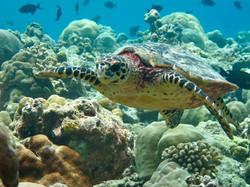 maldive15