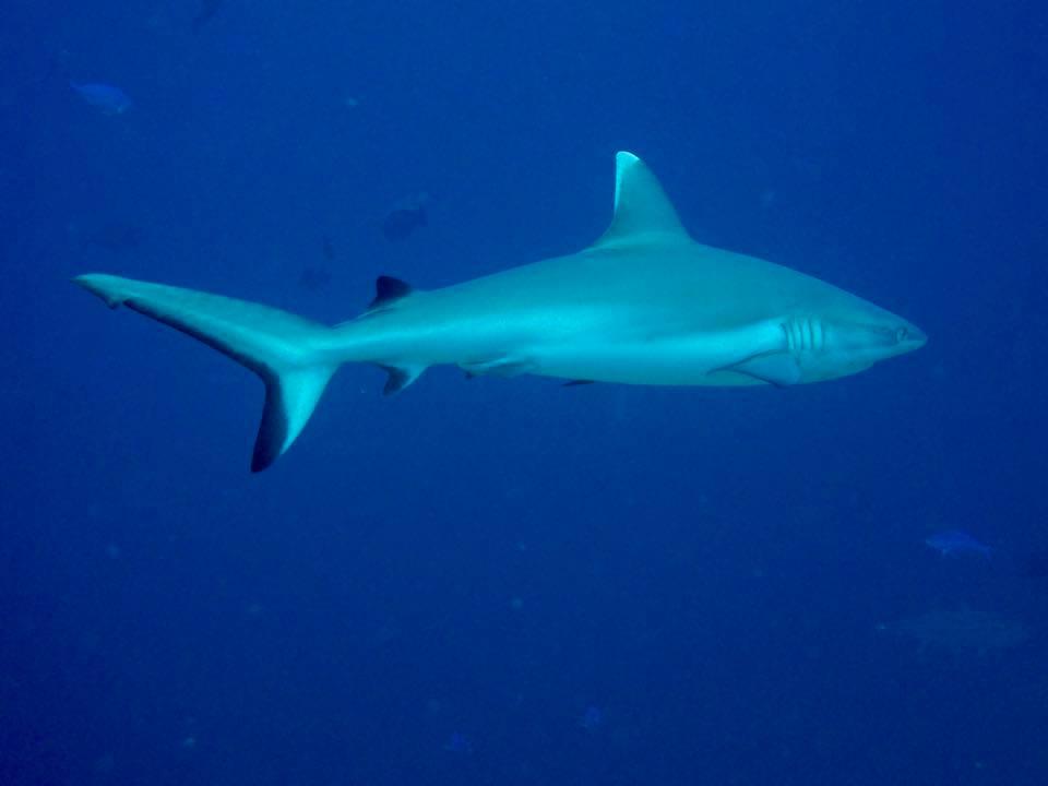 maldive16