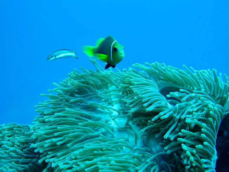 maldive8