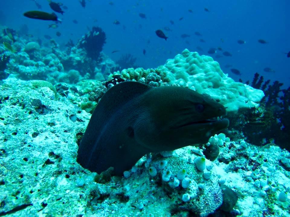 maldive9