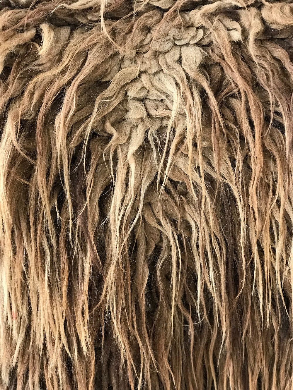 Long and coarse outer hair