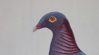 Scaly Naped Pigeon (Patagioenas squamosa