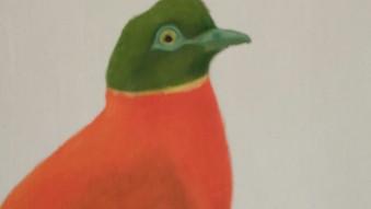 Orange Fruit Dove (Ptilinopus victor)