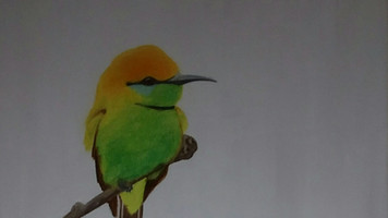 Little Green Bee Eater (Merops orientalis)