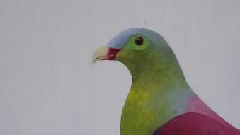 Thick Billed Green Pigeon (Treron curvirostra (columbidae))