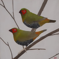 Green Backed Twinspot (Mandingoa nitidula)