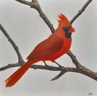 Northern (Red) Cardinal (Cardinalis cardinalis)