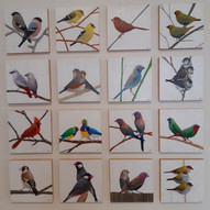 Of Flights and Fancies : The Finch Collection.jpg
