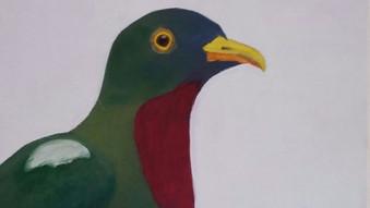 Claret breasted fruit dove / Ptilinopus viridis