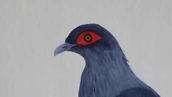 Madagascar Blue Pigeon (Alectroenas madagascariensis)