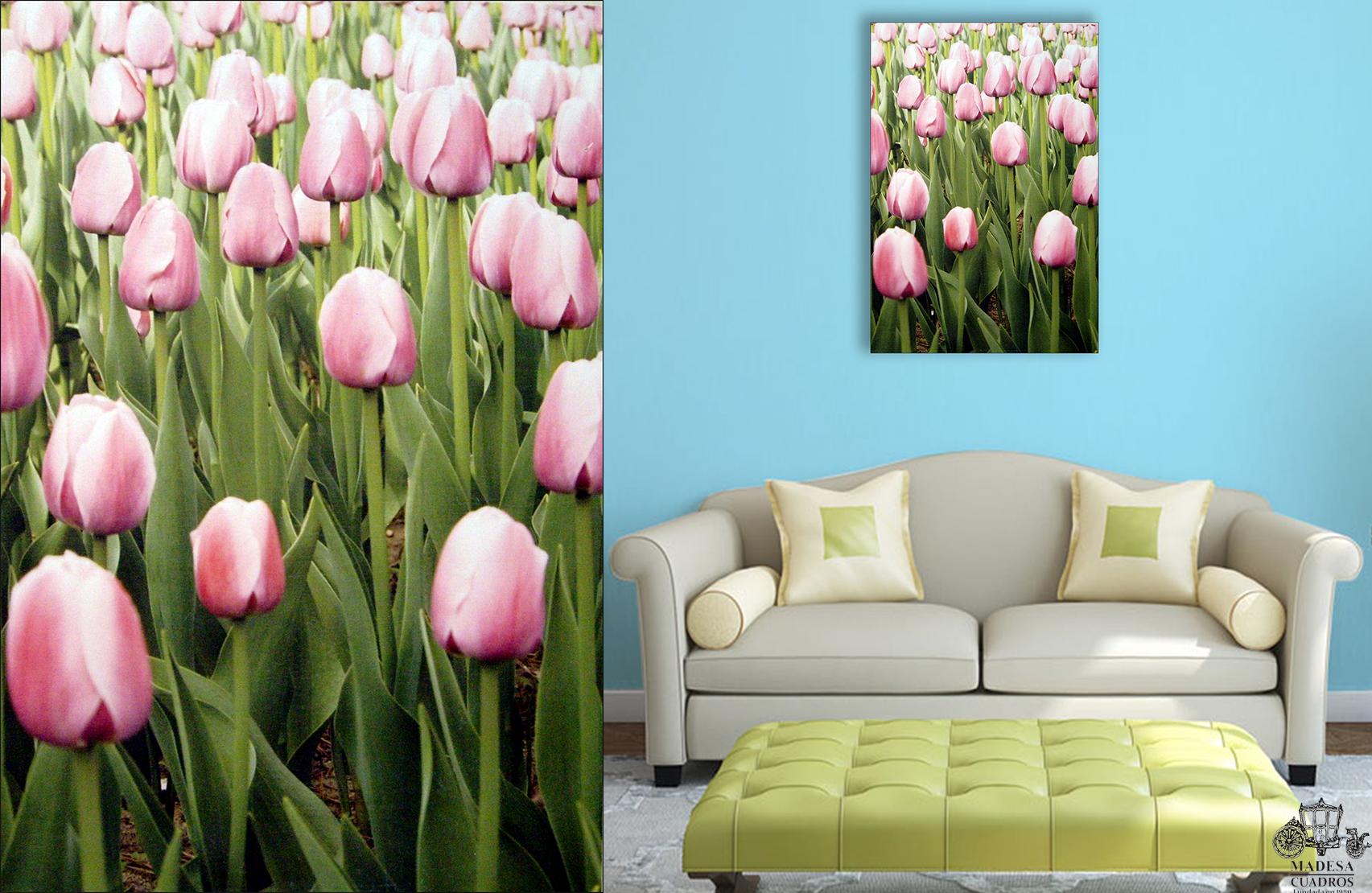 Tulipanes Rosas I