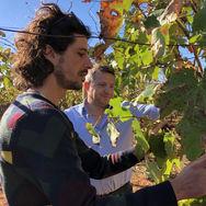 giuseppe-alessandro-vigneti-sezione-wine