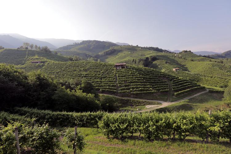 Perera Vineyards.JPG