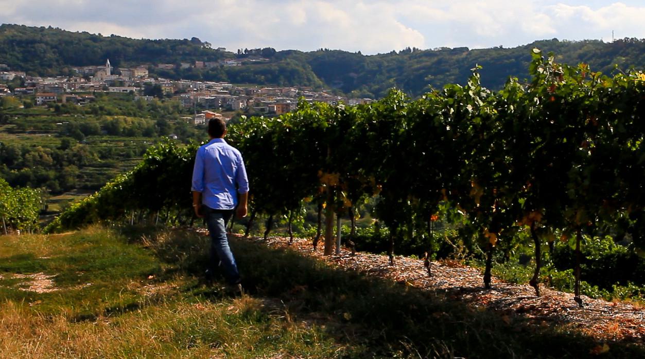 Nicola in Vineyard Walking.jpg