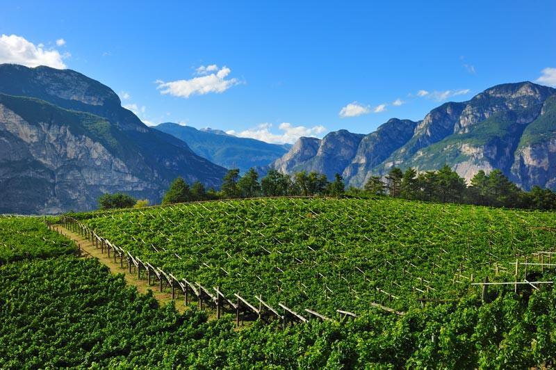 In-Trentino-sulla-strada-del-vino.jpg