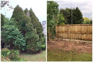 cypress removal chippenham