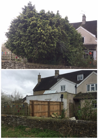 cypress removal