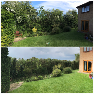 hedge reduction in trowbridge