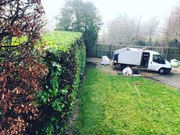 laurel hedge trimming