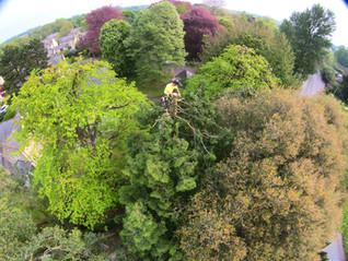 Tim at the top of cypress drone shot.JPG