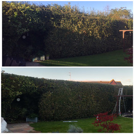 hedge trimming in melksham