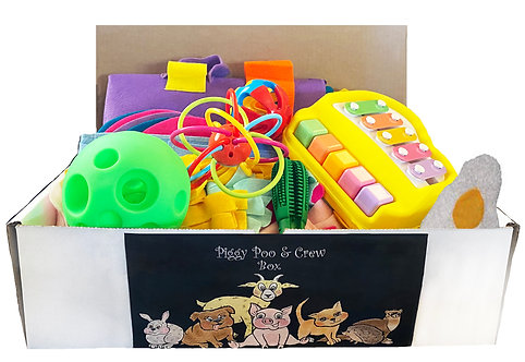 Piggy Poo and Crew Pig Box - $130 Value