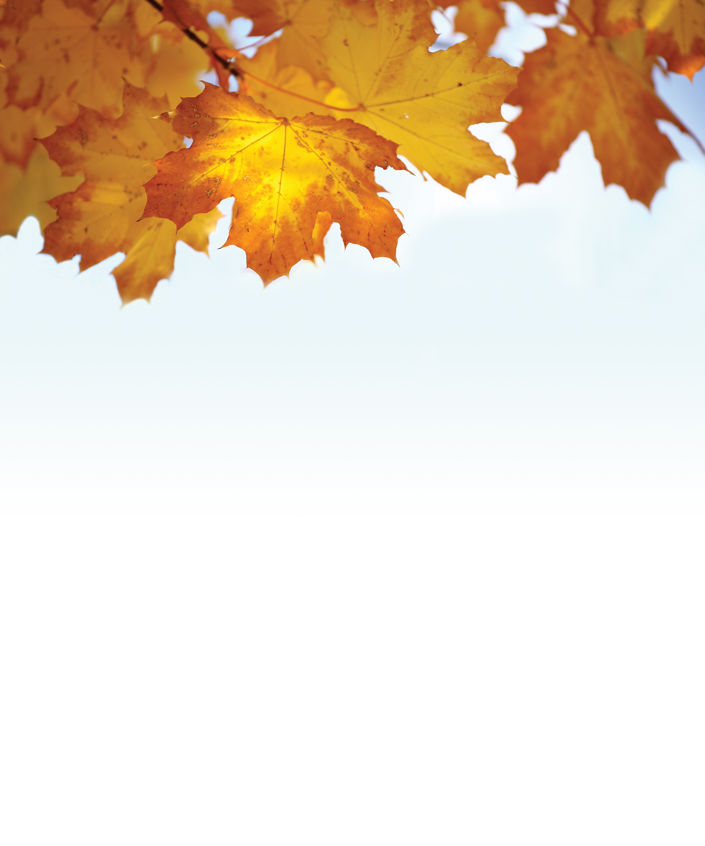 100709AutumnLeaves-Recovered-2.png
