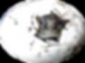 griechische Landschildkröte, Testudo hermanni, Schlupf