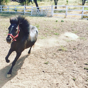 Mime the racing pony