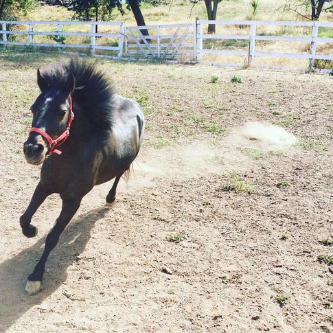 Mime the racing pony