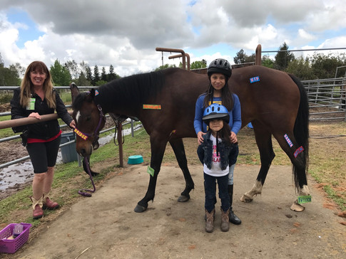 Roxie the lesson horse