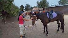 Adult horse lessons at HHH Ranch