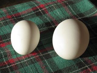 little eggs!