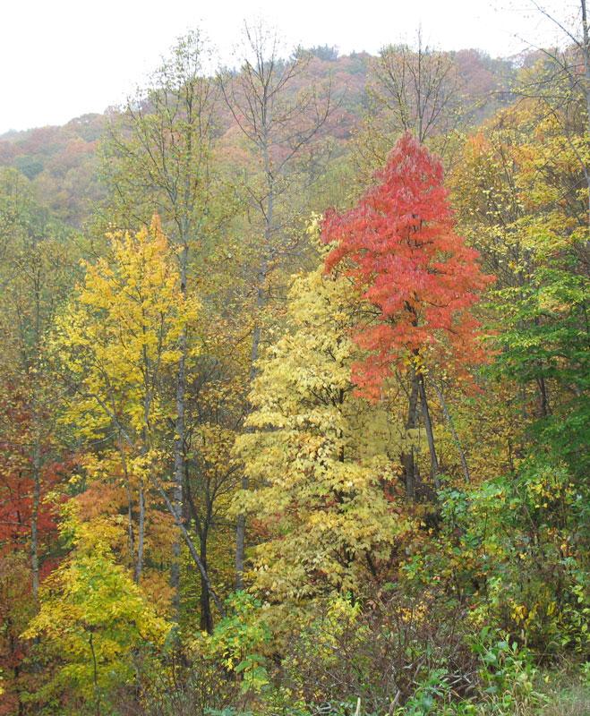 fall-color-in-rain
