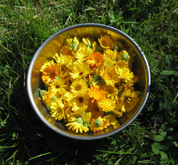 bowl-of-calendula-for-wix