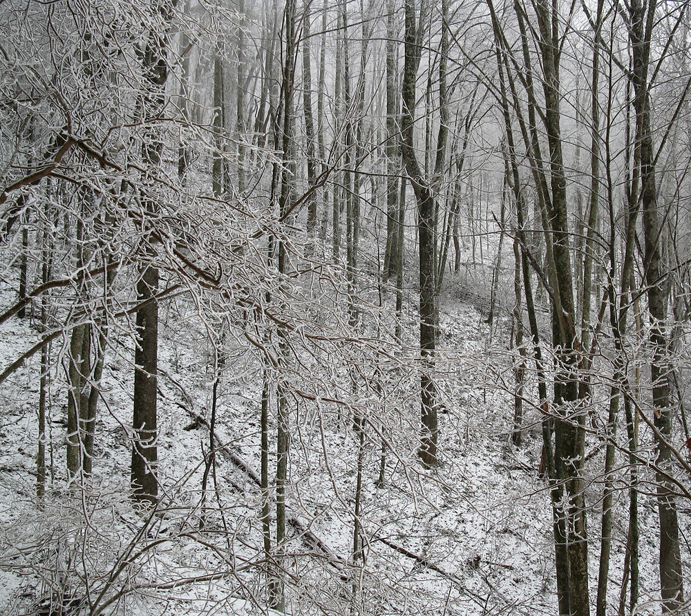 woods landscape in snow