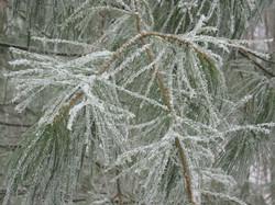 snow-on-ice-on-pine-for-blo