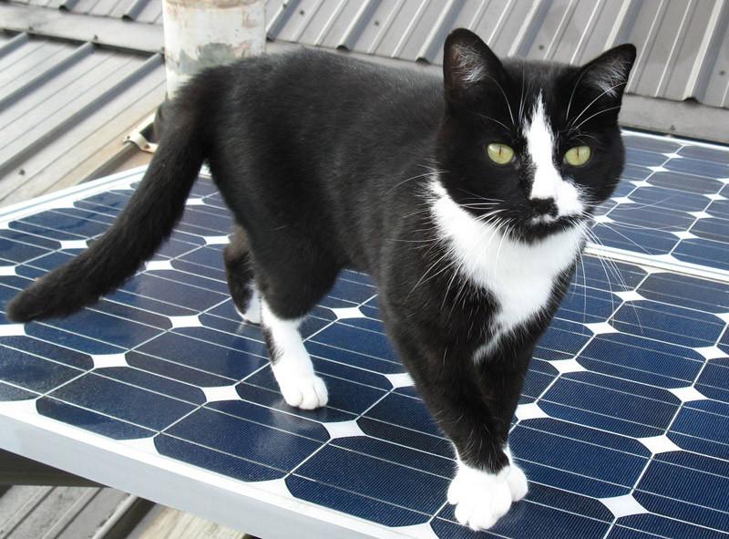 cat on PV panel