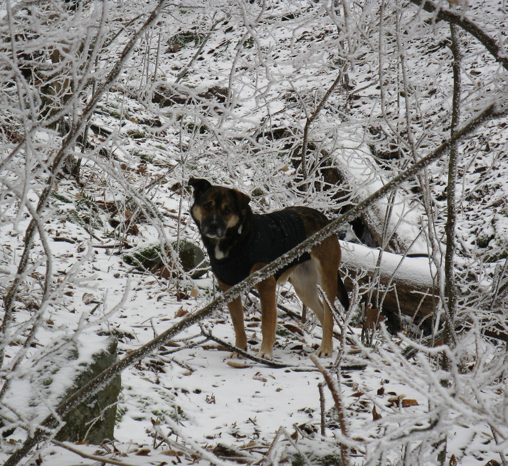 snow-dog-for-Wix.jpg