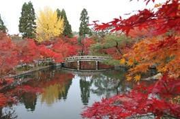 紅葉 autumn (fall)leaves